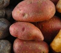 In Defense of Potatoes.