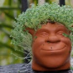 Something Green and Good to Eat…My Chia Pet!