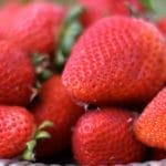Vanilla Birthday Cake {Gluten-Free} with Fresh Strawberries and Whipped Cream