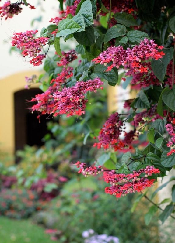 Pretty flowers in the Camino Real Oaxaca pool garden.
