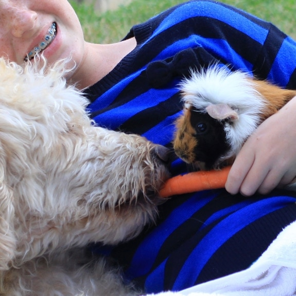 guinea pig and dog sharing a carrot