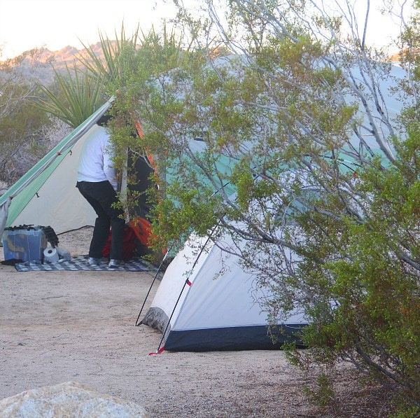 Cottonwood Campsite, Joshua Tree//The Spicy RD