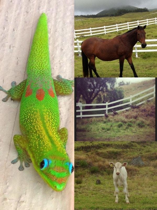 Hawaiian Wildlife, The Big Island, Hawaii // The Spicy RD