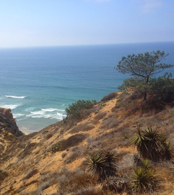 Torrey Pines Reserve // The Spicy RD