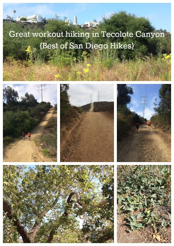 Great workout hiking in Tecolote Canyon, San Diego