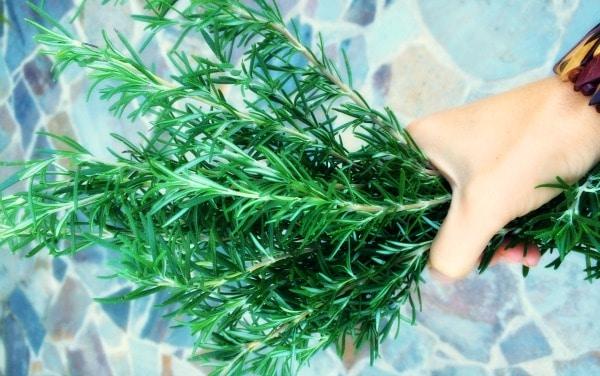 Fresh Rosemary. Instant aromatherapy!