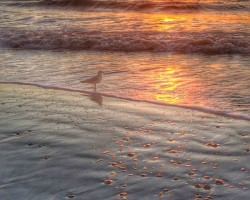 A great way to end the day in San Diego...Hike the beach trail at Torrey Pines Reserve, and watch the sunset on Torrey Pines Beach.