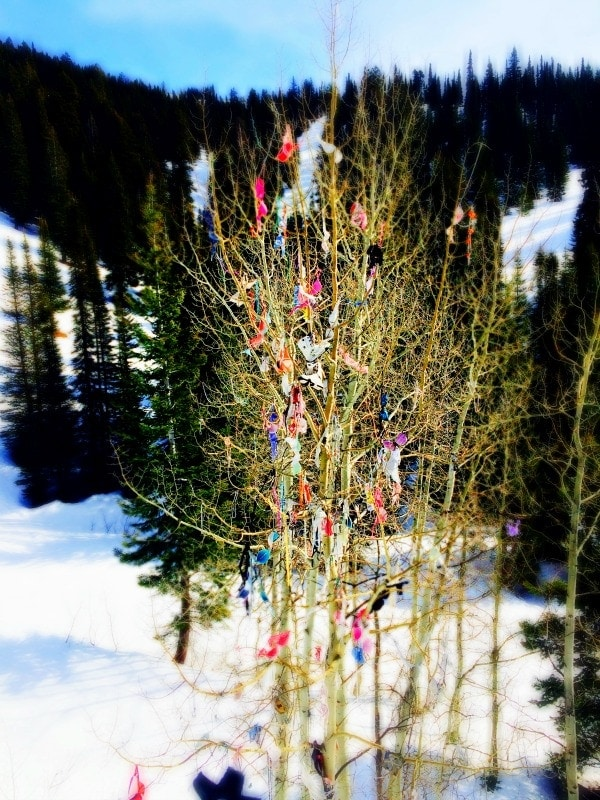 Bra Tree, Brundage Ski Resort | EA Stewart