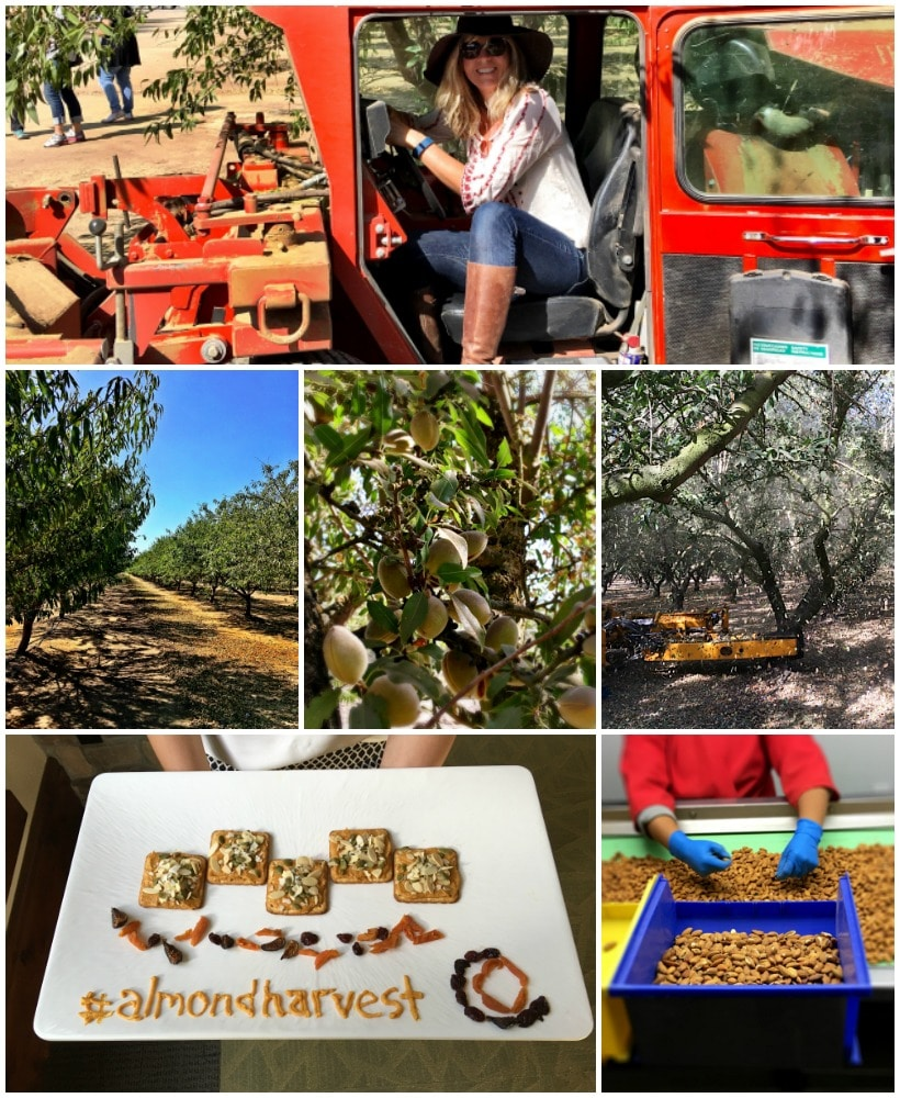 Happiness is hanging out in a California Almond Grove! Thanks to California Almonds for sponsoring the 2016 Almond Harvest Tour #sponsoredtravel | Check out my almond grove adventures @thespicyrd www.eastewart.com