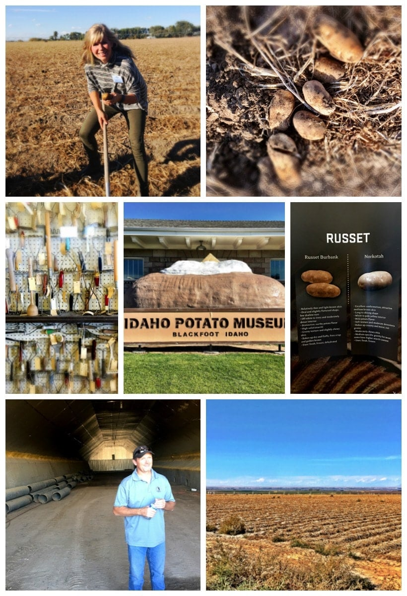 Learn about world famous Idaho potatoes and the Idaho potato harvest @thespicyrd www.eastewart.com #AD