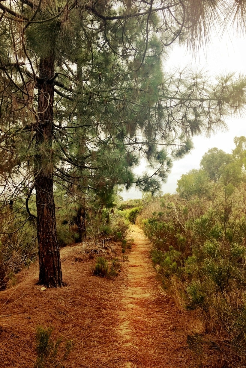 Favorite Hikes in San Diego: Lake Miramar Hiking Trail. The trail is ~ 5miles around the lake, flat, scenic, and dog friendly.