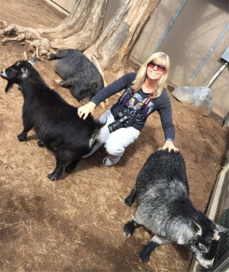 EA Stewart with goats.