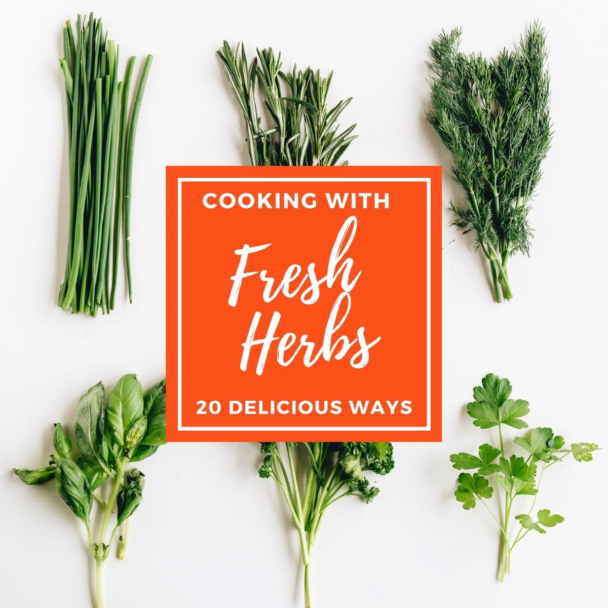 cooking with fresh herbs | chives, rosemary, dill, basil, parsley, and cilantro on a white background