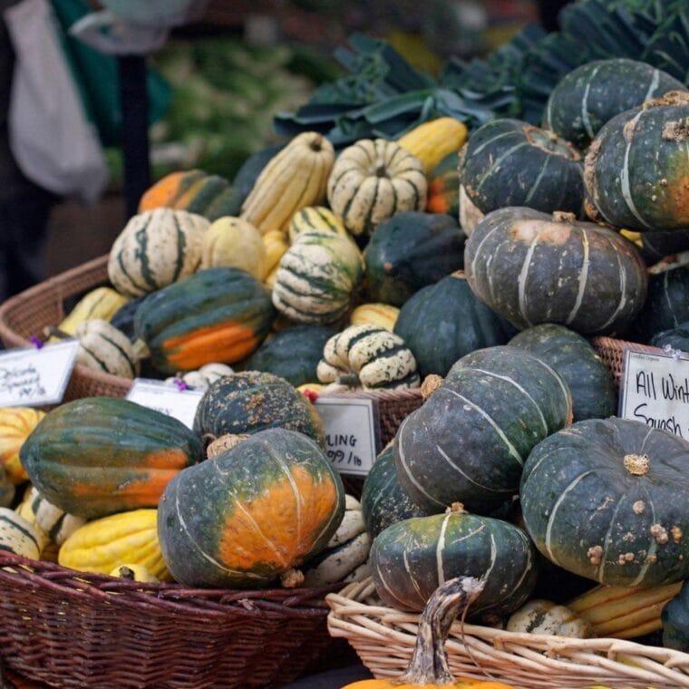 Photo of winter squash varieties including acorn squash and delicata squash.