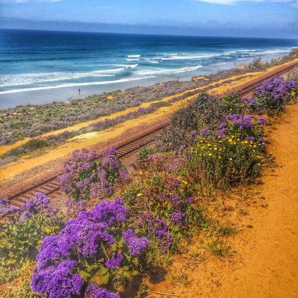 Del Mar beach Cliffs. One of my favorite walks in San Diego!
